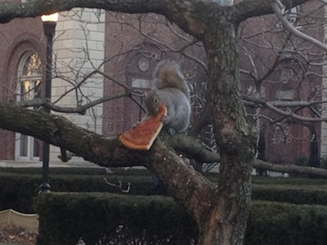 pizzasquirrel