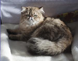 HUM_cat2_nickolastitkov