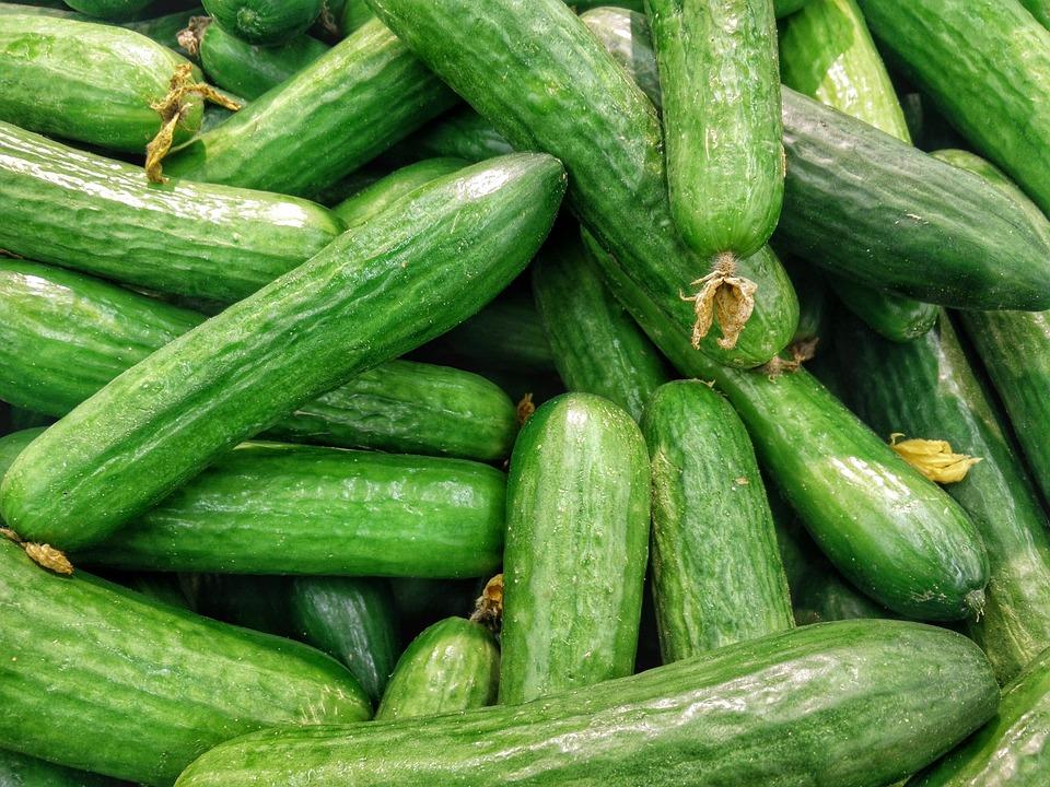 STOCK_PHOTO_cucumber