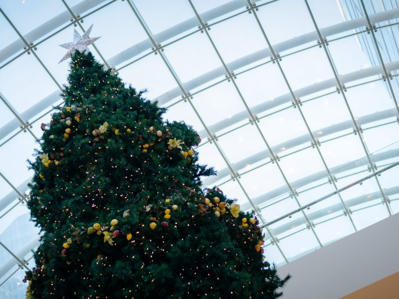 hum_justin_quaintance_christmas_tree-1-of-1