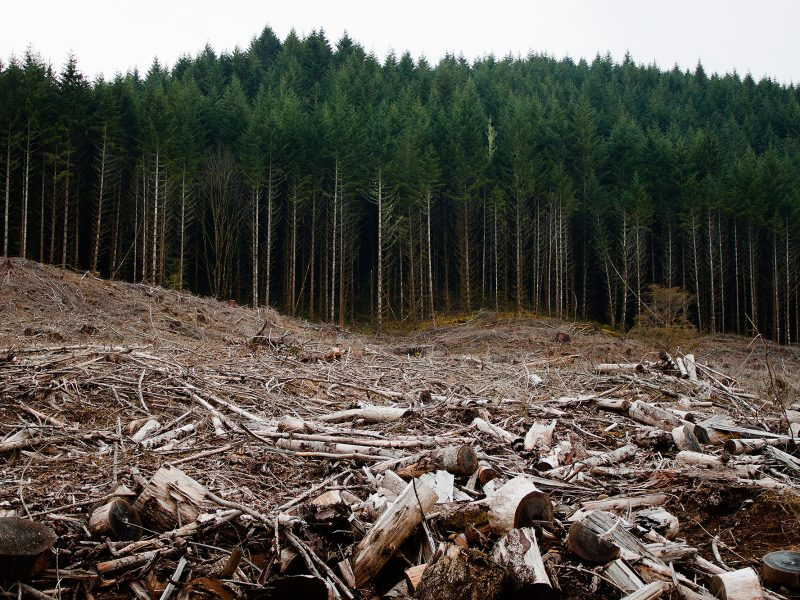 HUM_Clearcutting
