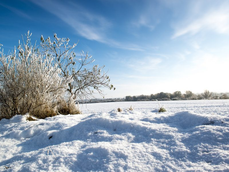 HUM_SnowWheat
