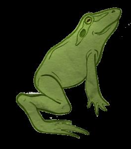 NEWS_Leon_the_frog_Smanatha_Lucy_JUMP1