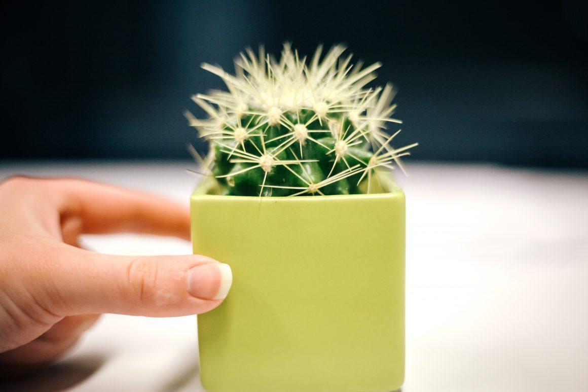 HUMOUR_CactusFidgetSpinner_MariahWilson-6201