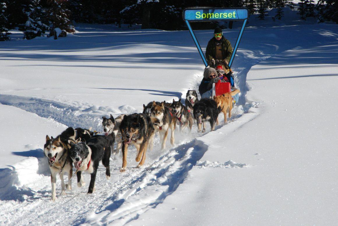 HUM_dogsledding