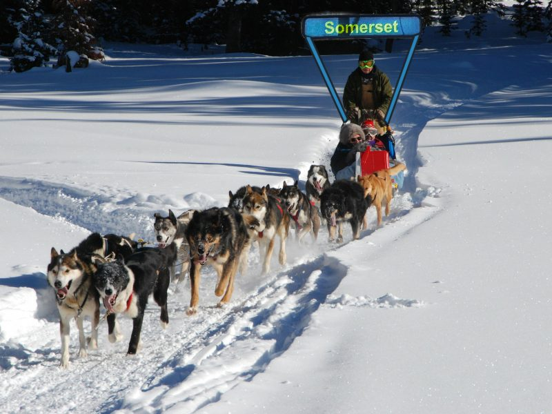HUM_dogsledding
